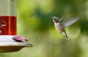 hummingbird400
